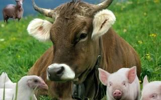 Всё о животноводство: советы по уходу и разведению животных