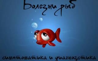 Обзор болезней рыб: симптомы и методы лечения