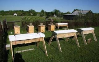 Содержание пчёл и уход за ними: полезные советы начинающим