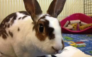 Особенности разведения кроликов: рекомендации для фермеров