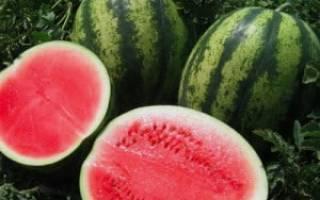 Арбуз Холодок: описание сорта, фото, отзывы, правила выращивания