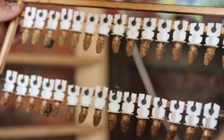 Вывод маток в шприцах: создание конструкции и технология выведения