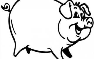 Особенности забоя и разделки туши свиней: инструкции