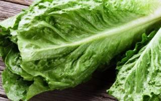 Салат (растение): сорта, выращивание, уход, борьба с вредителями