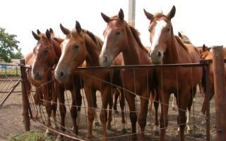 Разведение лошадей: правила и полезные рекомендации