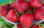 Петрушка кудрявая: описание сорта, выращивание и уход, реальные отзывы