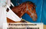 Болезни лошади: симптомы, лечение и профилактика