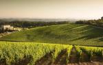 Подкормка винограда осенью: какие удобрения использовать и как проводить процедуру?