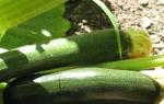 Кабачок Черный красавец: описание сорта, фото, уход, отзывы