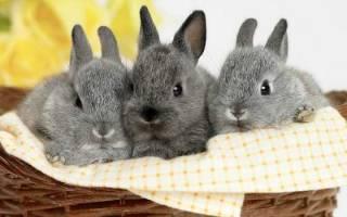 Всё о кроликах: от рождения до забоя
