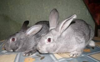 Болезни кроликов: симптомы и методы лечения