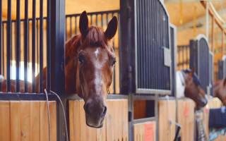 Оборудование и постройки для содержания лошадей: проектирование и строительство