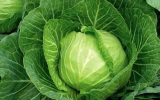 Всё о капусте: сорта, методы посадки, советы по уходу и хранению