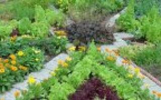 Что после чего можно сажать на огороде? Правила севооборота