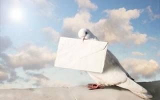 Голубиная почта: актуальность в наши дни, породы, условия содержания, обучение