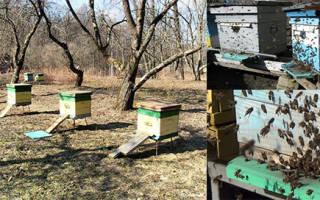 Весенний облет пчел: значение, сроки, особенности проведения