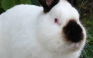 Все породы кроликов: их подробное описание и фото