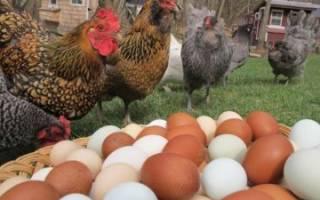 Болезни кур: описания, симптомы и лечение куриных заболеваний