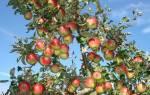 Садовые деревья: виды, посадка, выращивание и уход