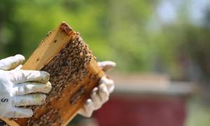 Календарь пчеловода по месяцам: задачи, мероприятия и список работ