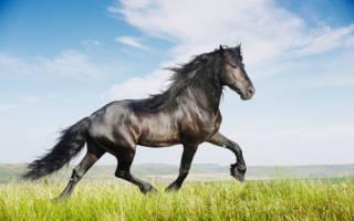Обзоры пород лошадей: описание, фото и особенности