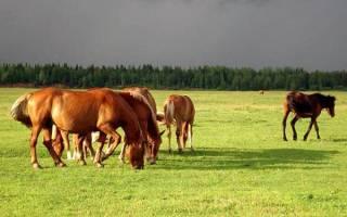 Описание болезней лошадей: симптомы и лечение