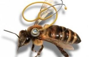 Обзор болезней пчёл: описание, симптомы, лечение