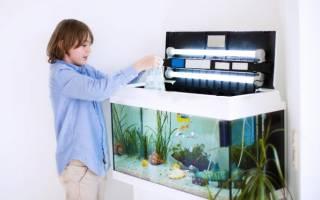 Статьи о содержании и уходе за рыбами: советы начинающим