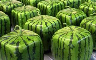 Квадратный арбуз: фото, секреты формы, посадки и выращивания, отзывы