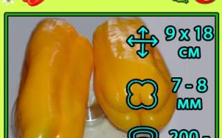 Перец Джемини: описание сорта с фото, посадка, выращивание и уход, плюсы и минусы, отзывы