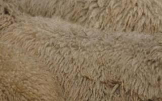 Забой, разделка, выделка шкур овец: важные рекомендации