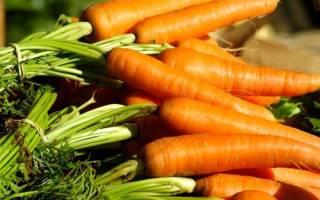Всё о моркови: лучшие сорта, советы по уходу и выращиванию овоща
