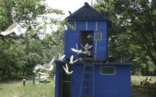 Оборудование и постройки для голубей: проектирование и строительство