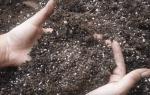 Как и чем обеззаразить землю перед посадкой рассады: проверенные способы